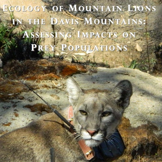 Mountain Lion - 2012