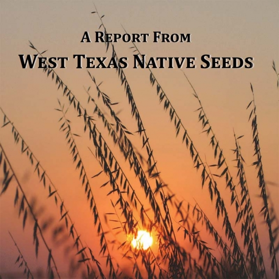 Native Seeds - 2016