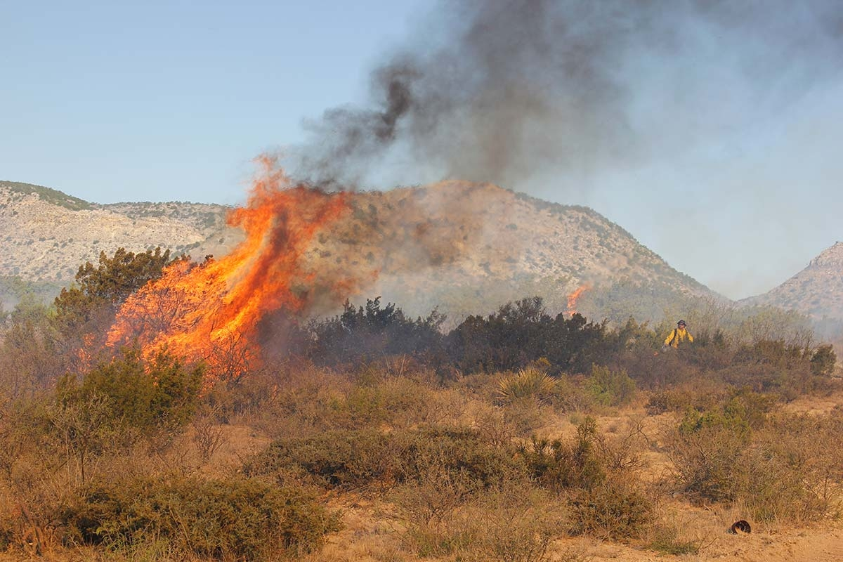 FIRE ECOLOGY RESEARCH