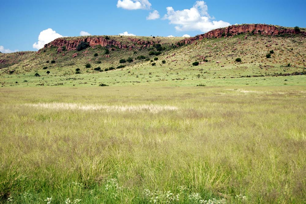 RANGELAND RESTORATION RESEARCH