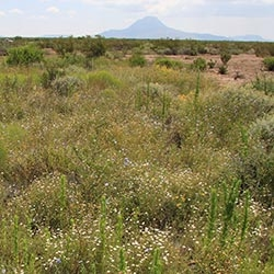 WILDFIRE AND SOIL MICROFLORA