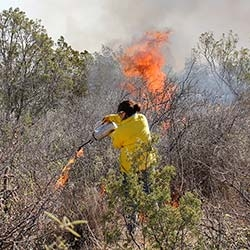 PRESCRIBED FIRE, HERBICIDE, AND WHITEBRUSH