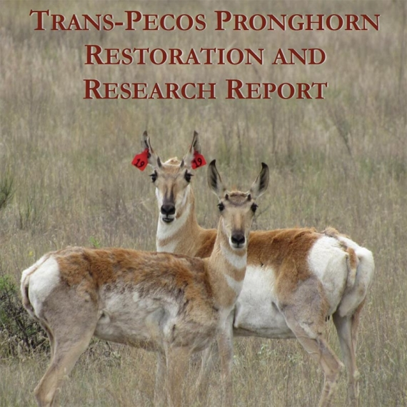 Pronghorn Research Report - 2017