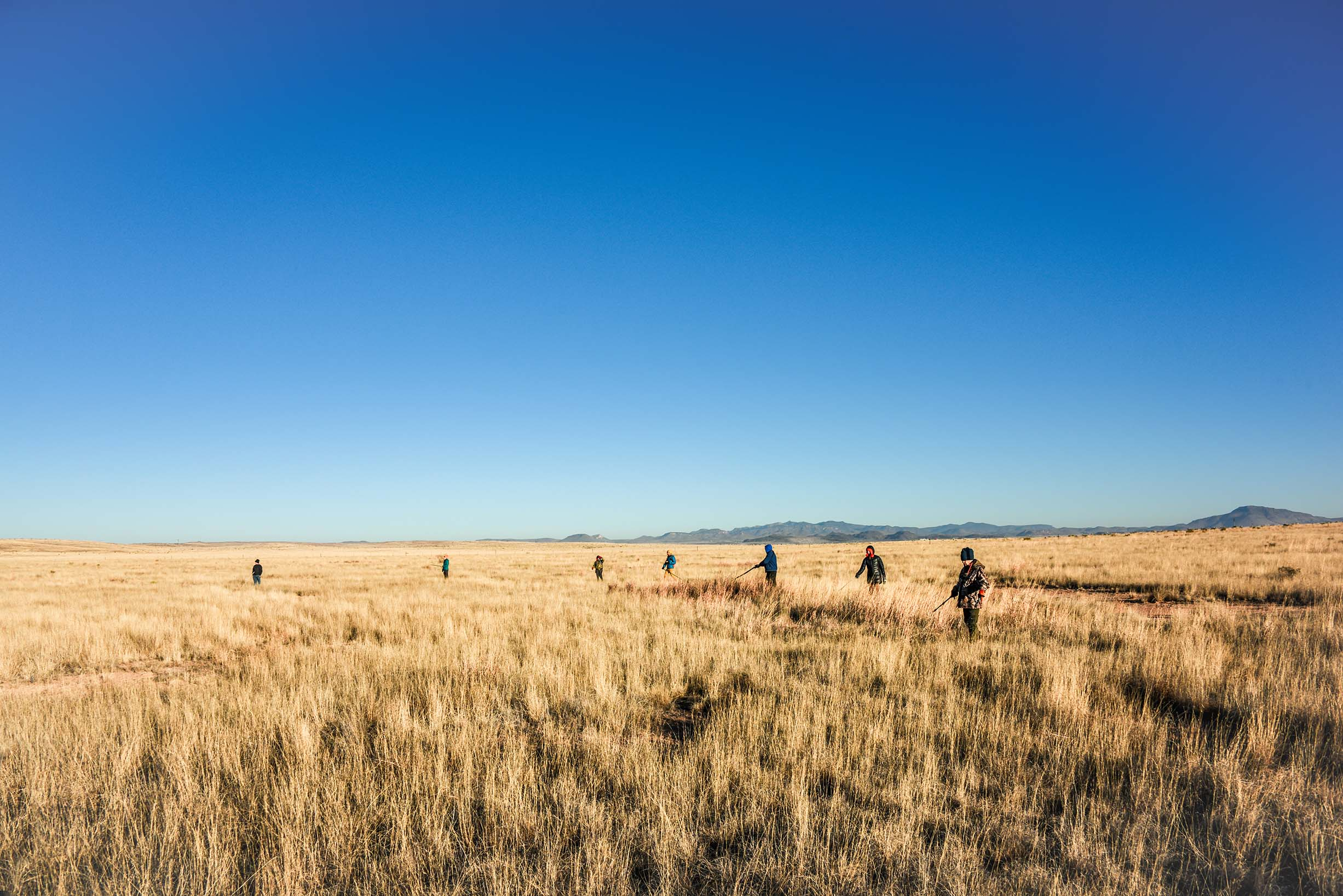 grassland-bird-research-at-mimms-unit-ranch_32019592577_o_resized